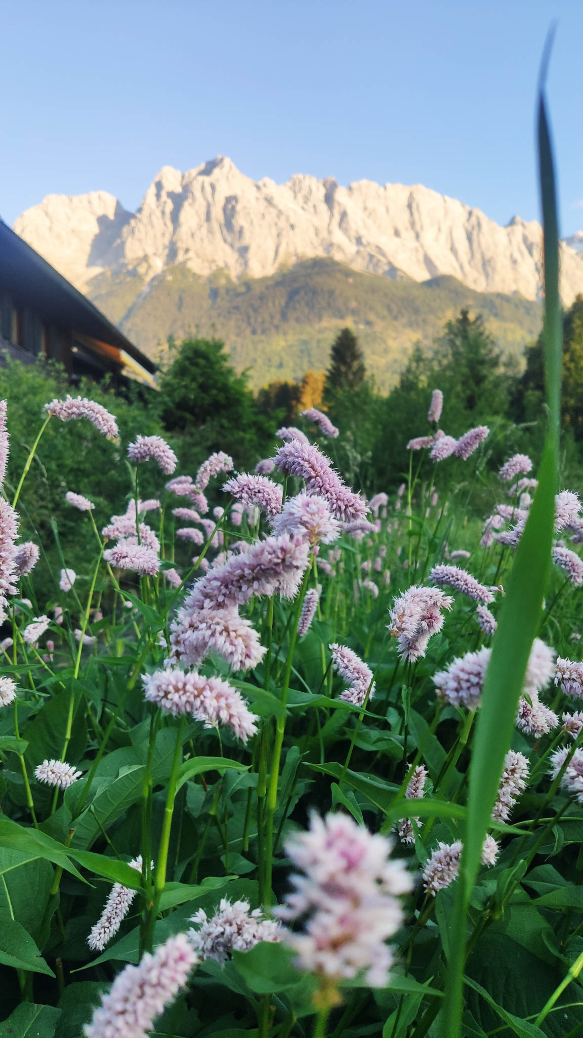 Sunset view with flowers at Eibsee